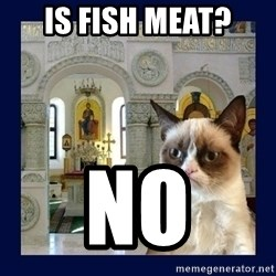 Grumpy Orthodox Cat - is fish meat? No