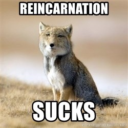 Disappointed Tibetan Fox - Reincarnation sucks