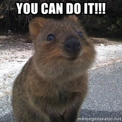 Seemingly Innocent Quokka - You can do it!!!