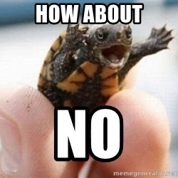 angry turtle - how about no