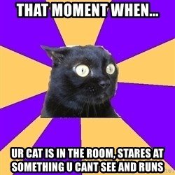 Anxiety Cat - that moment when... ur cat is in the room, stares at something u cant see and runs