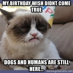 Birthday Grumpy Cat - my birthday wish didnt come true dogs and humans are still here...