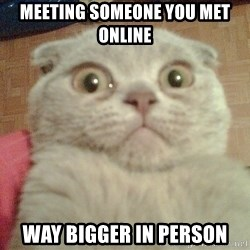 GEEZUS cat - meeting someone you met online way bigger in person