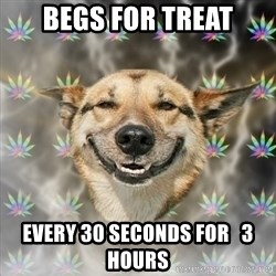 Stoner Dog - begs for treat every 30 seconds for   3 hours