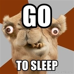 Crazy Camel lol - go  to sleep