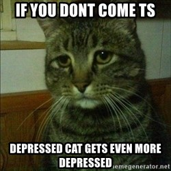 Depressed cat 2 - If you dont come ts  depressed cat gets even more depressed