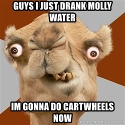 Crazy Camel lol - guys i just drank molly water im gonna do cartwheels now