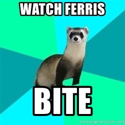 Obvious Question Ferret - WATCH FERRIS  BITE