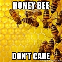 Honeybees - honey bee don't care