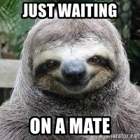 Sexual Sloth - JUST WAITING  ON A MATE