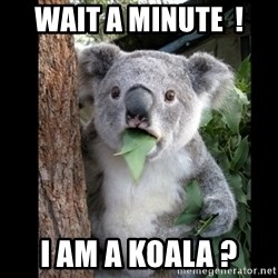 Koala can't believe it - wait a minute  ! i am a koala ?