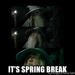 Confused Gandalf -  It's spring break