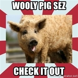 Wooly Pig - WOOLY PIG SEZ CHECK IT OUT