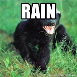 Honey Badger Actual - Rain