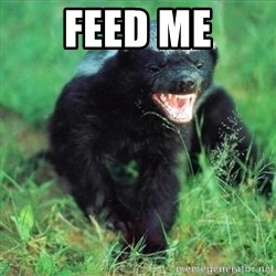 Honey Badger Actual - Feed me