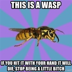 kyriarchy wasp - This is a wasp if you hit it with your hand it will die, stop being a little bitch