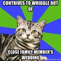 Introvert Cat - contrives to wriggle out of close family member's wedding