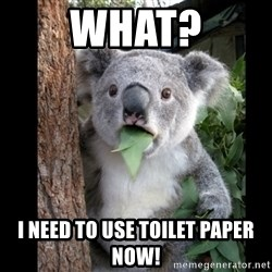 Koala can't believe it - What? i need to use toilet paper now!