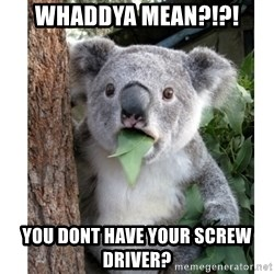 surprised koala - WHaddya Mean?!?! You dont have your screw driver?