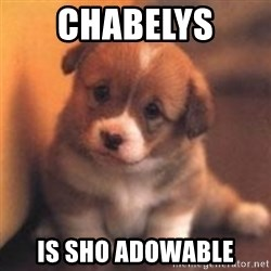 cute puppy - Chabelys  Is sho AdoWabLe