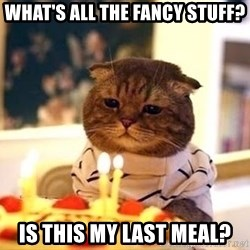 Birthday Cat - what's all the fancy stuff? is this my last meal?