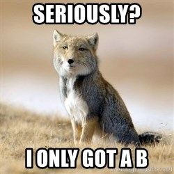 Disappointed Tibetan Fox - seriously? i only got a b