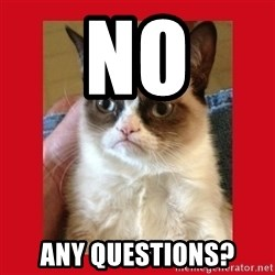 No cat - NO Any questions?
