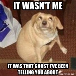Oh You Dog - it wasn't me it was that ghost i've been telling you about