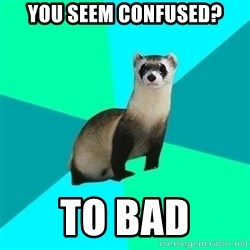 Obvious Question Ferret - YOU SEEM CONFUSED? TO BAD