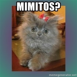 cute cat - Mimitos?