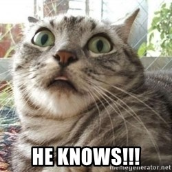 scared cat -  he knows!!!