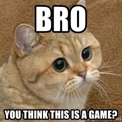motherfucking game cat - bro you think this is a game?
