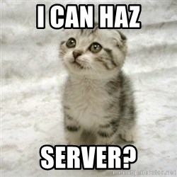 Can haz cat - I CAN HAZ SERVER?