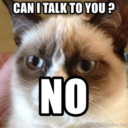 Angry Cat Meme - Can i talk to you ? no