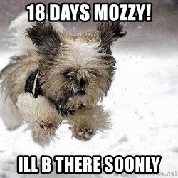 Cute Dog - 18 DAYS MOZZY! ILL B THERE SOONLY