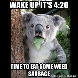 Koala can't believe it - wake up it's 4:20 time to eat some weed sausage