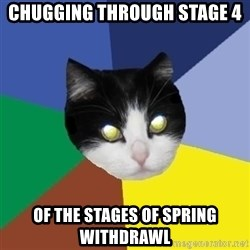 Winnipeg Cat - chugging through stage 4 of the stages of spring withdrawl