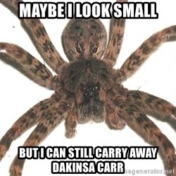 Spider - Maybe i look small but i can still carry away dakinsa carr