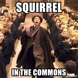 Troll In The Dungeon - SQUIRREL  IN THE COMMONS