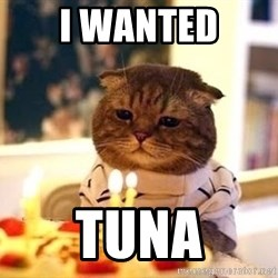 Birthday Cat - i wanted tuna