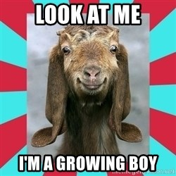 Gloating Goat - Look at me I'm a growing boy