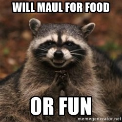evil raccoon - will maul for food or fun