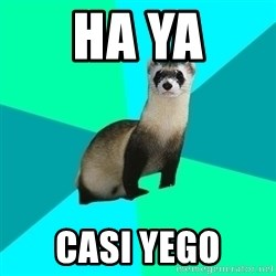 Obvious Question Ferret - HA YA CASI YEGO