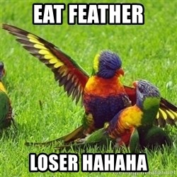 angrybird - EAT FEATHER LOSER HAHAHA