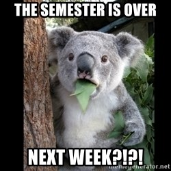 Koala can't believe it - the semester is over next week?!?!