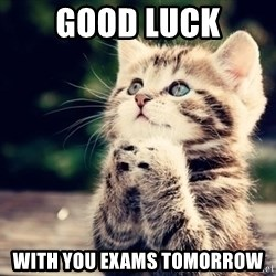 good luck cat - Good Luck With you exams tomorrow