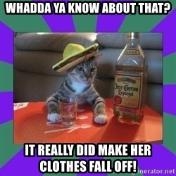 Tequila cat - whadda ya know about that? it really did make her clothes fall off!