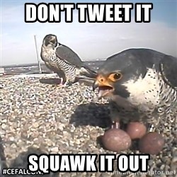 #CEFalcons - Don't tweet it Squawk it out