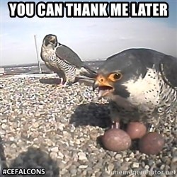 #CEFalcons - You can thank me later