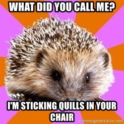 Homeschooled Hedgehog - what did you call me? i'm sticking quills in your chair